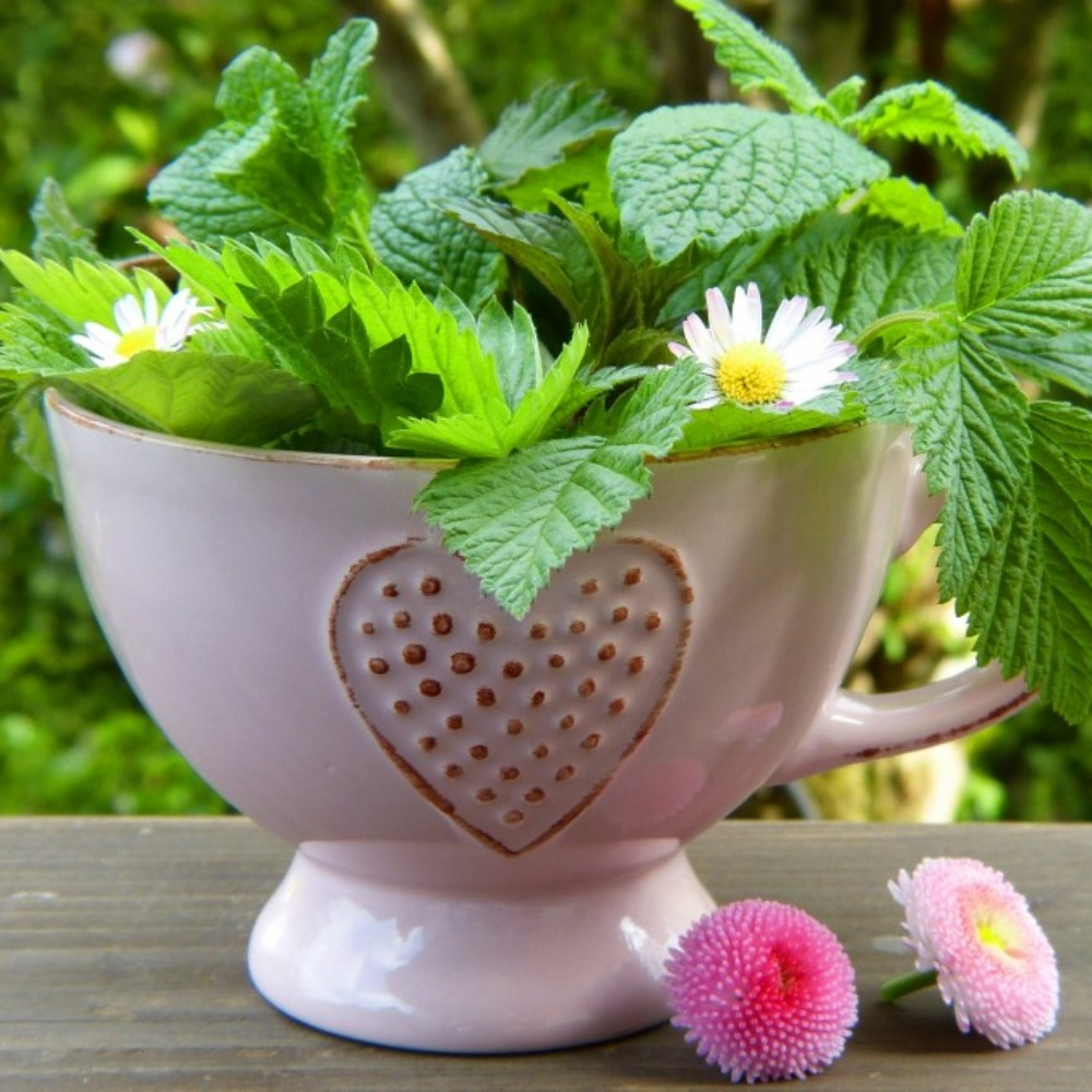 Growing Your Own Herbal Tea